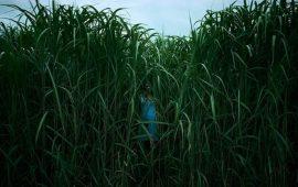 Review In the Tall Grass (Te zien op Netflix)
